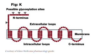 picture showing Possible glycosylation sites in the Endocannabinoid System